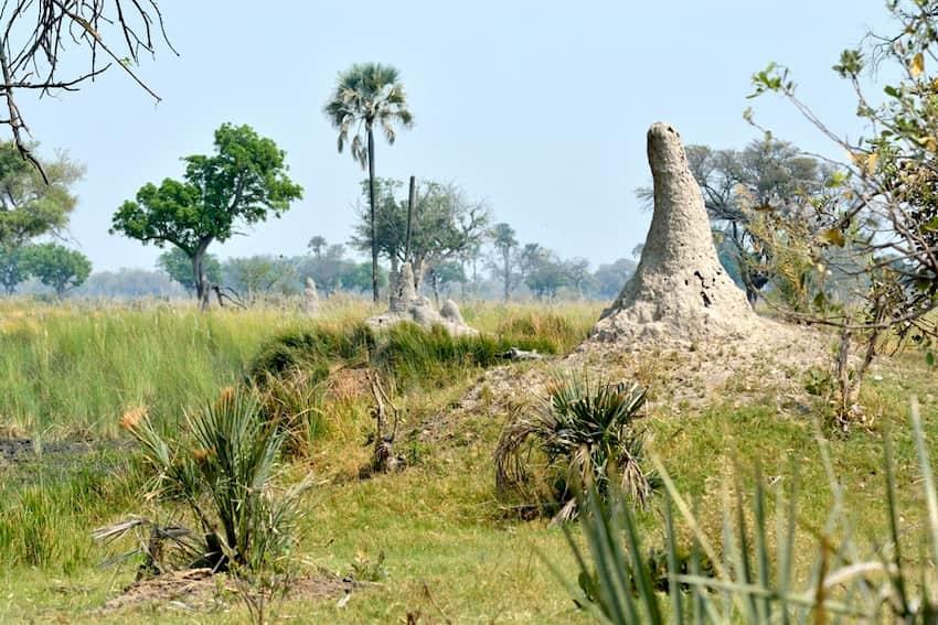 Allineamento dei termitai