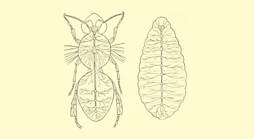 Sistema nervoso degli insetti