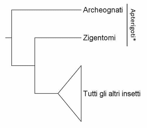 Cladogramma che mostra le relazioni tra archeognati, zigentomi e tutti gli altri ordini di insetti