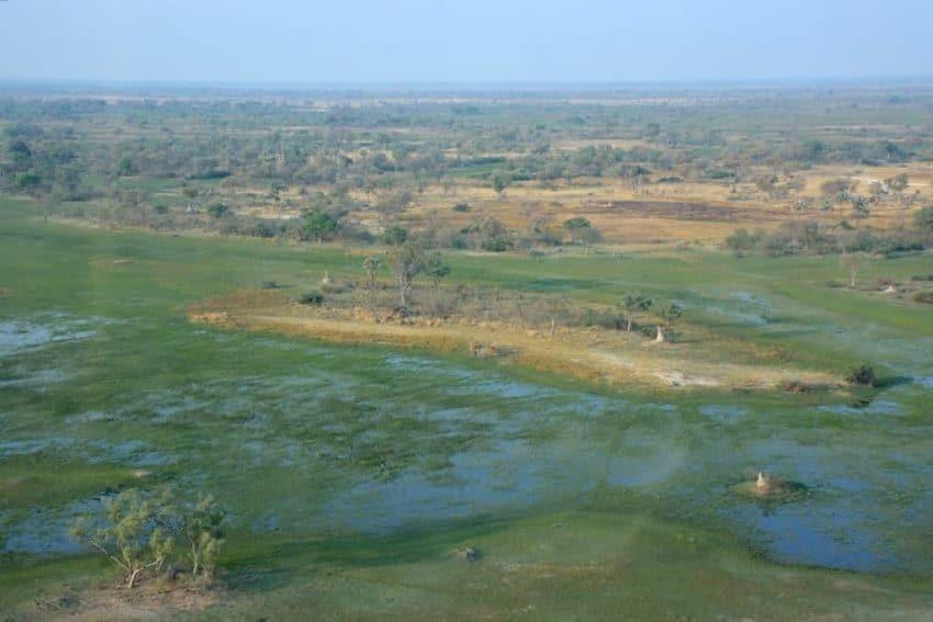 okvango