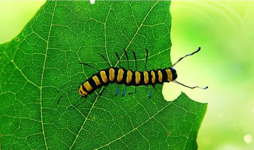 sistema digerente insetti