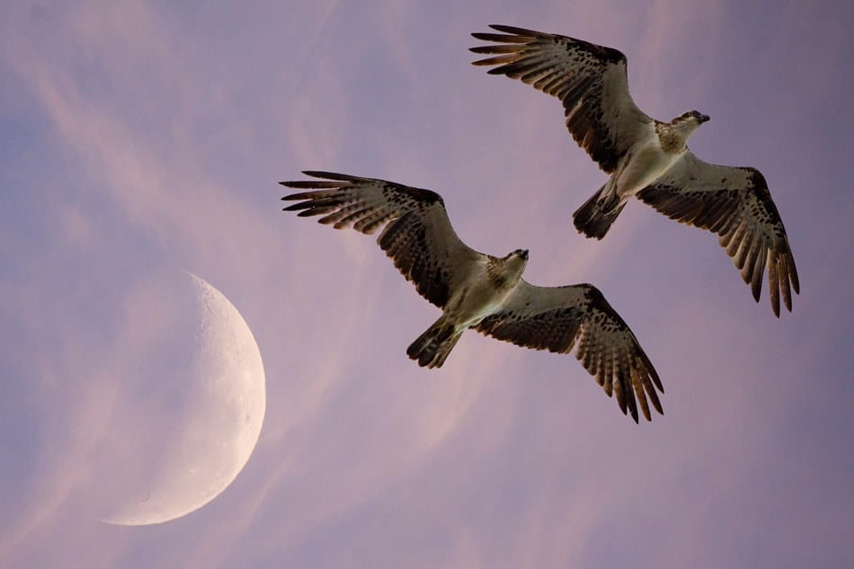 Luna e vita