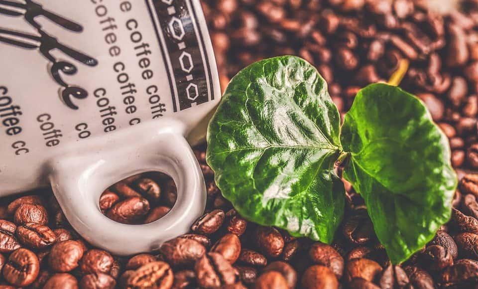 perchè le piante producono caffeina