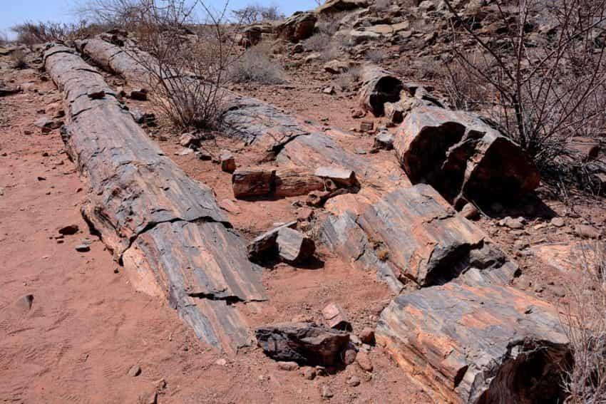 Alberi fossili - Foresta Pietrificata - (C) Aaronne Colagrossi