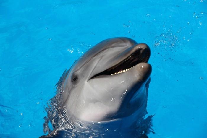 """delfino che """"sorride"""""""