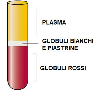 Sangue centrifugato