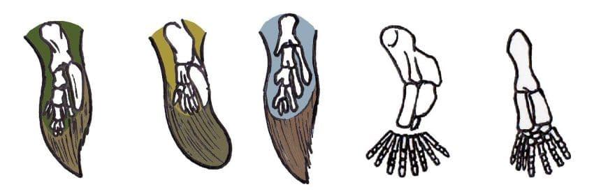 arti-tetrapodi