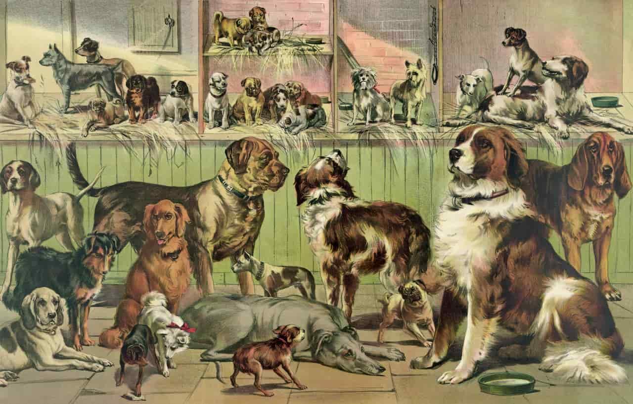 coevoluzione uomo-cane