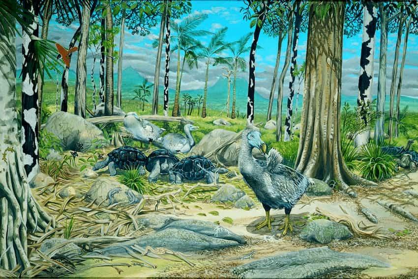 dodo_habitat
