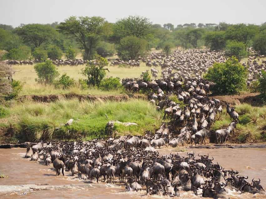 migrazione degli gnu