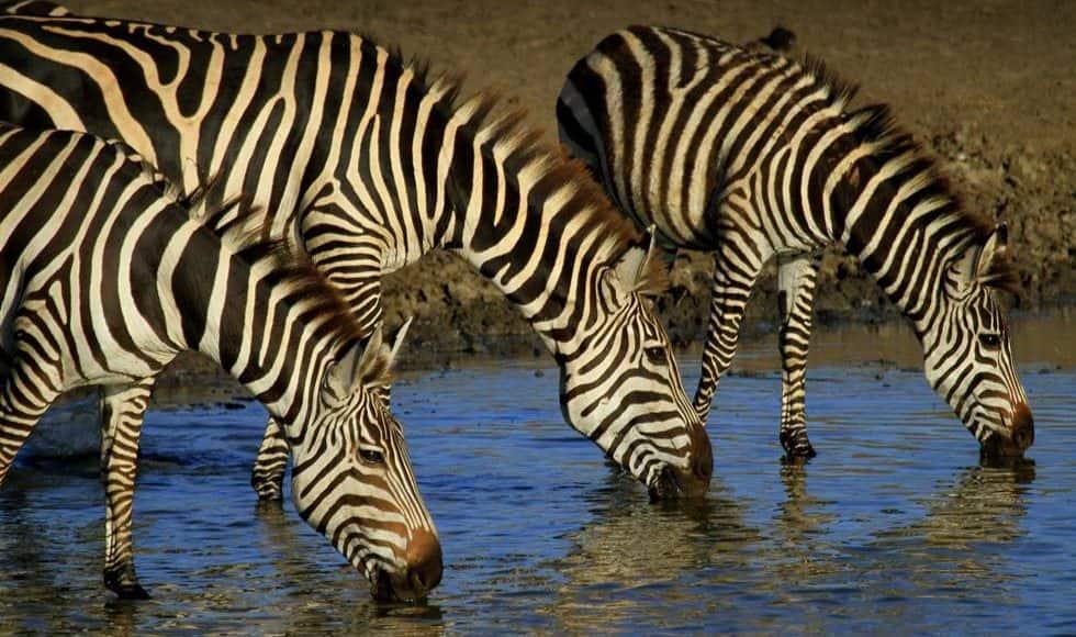 migrazioni animali