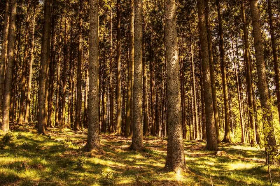 bosco a fustaia