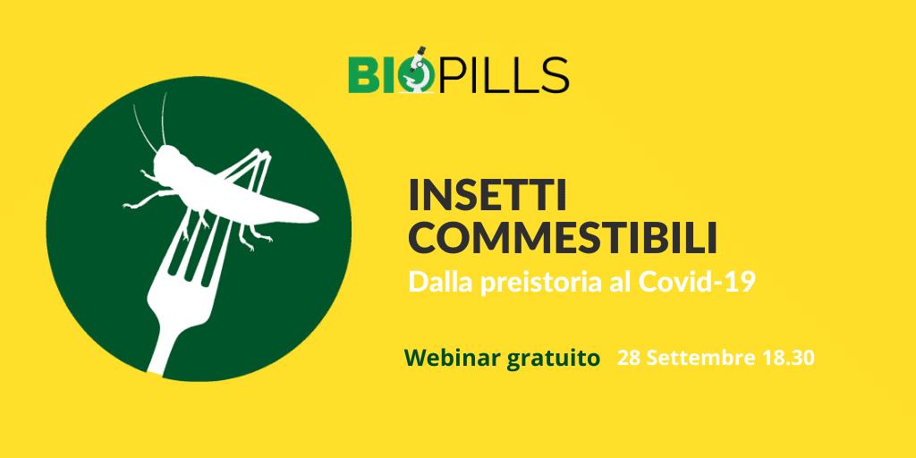 insetti commestibili webinar