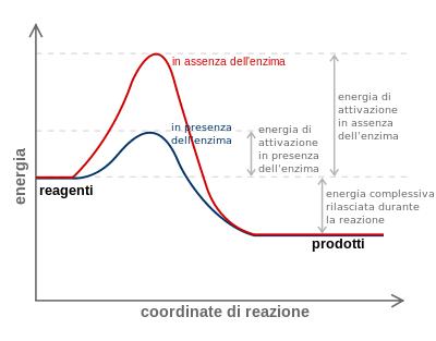 Diagramma attivazione enzimi