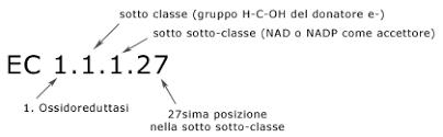 classificazione ec enzimi