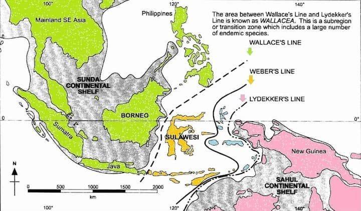 linea_wallace