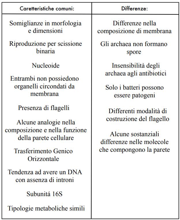 Analogie e differenze tra archaea e procarioti