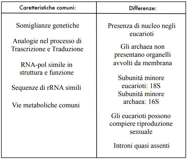 Analogie e differenze tra archaea ed eucarioti