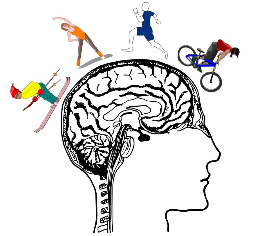 sport incrementa neurogenesi ippocampale