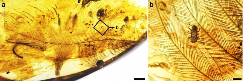 fossilizzazione ambra