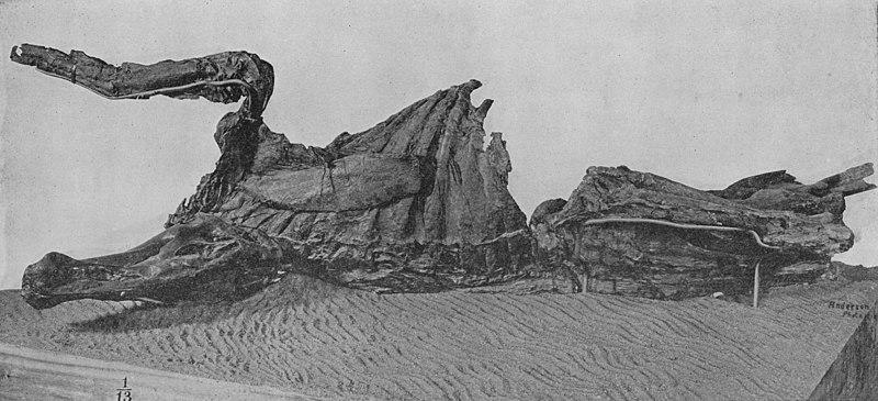 fossilizzazione mummificazione