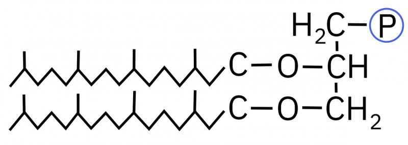 Membrana di tetraeteri di glicerolo