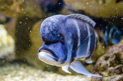 foto di un pesce