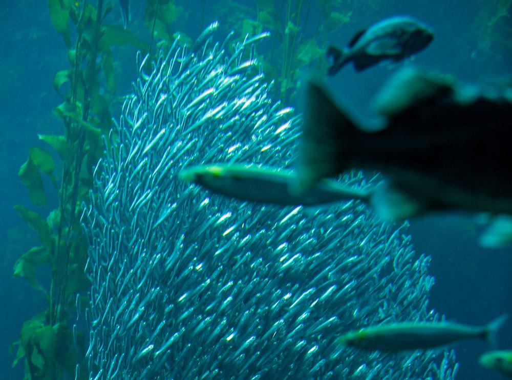 I pesci sanno contare